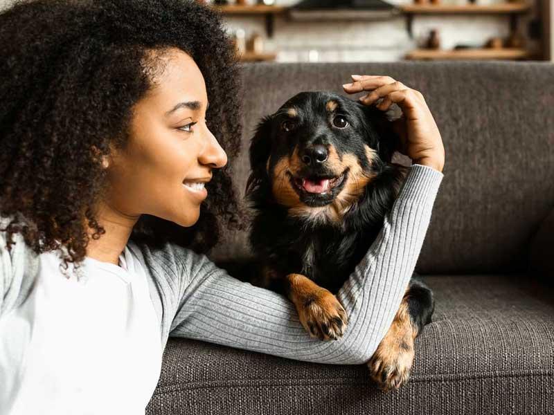 Pet Friendly Rentals in Boca Raton